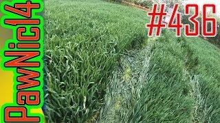 Susza oraz pszenica na V i III klasie ziemi (porównanie) - Życie zwyczajnego rolnika #436