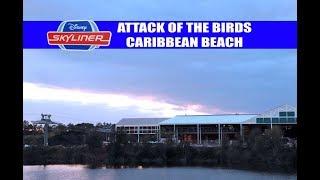 Disney Skyliner Caribbean Beach Resort Attack of the Birds