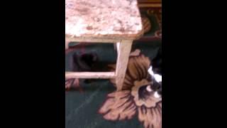 Коты дерутся ржач смотреть до конца