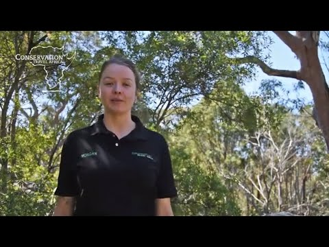 Watch Morgan's review of our Endangered Wildlife Conservation Programme in South Africa