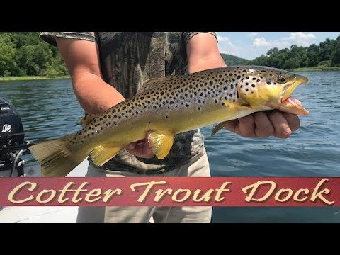 Arkansas White River Trout Fishing Report June 13, 2018