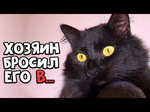 Спасение побитого кота. Отняли у живодера. Котик ищет дом / SANI vlog