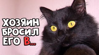 Rescue a beaten cat. Taken from the flayer (English subtitles) / SANI vlog