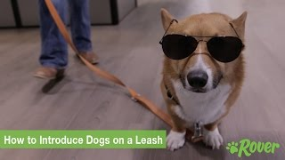how to introduce dogs on a leash rover com quick tips