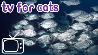Download Video Calming TV For Cats - Garden Birds and Fish! - Cat Entertainment MP3 3GP MP4