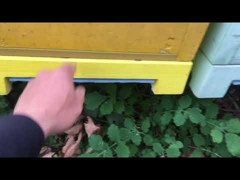 Обработка пчел бивароолом