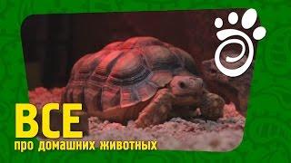 Правильный Уход Для Черепахи (Часть Первая). УхВсе О Домашних Животных(Основное описание ролика Сухопутные черепахи - тема интересная, как правильно создать для них условия:..., 2014-12-16T09:00:07.000Z)