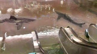 shark tank breaks in mall..