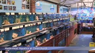PFK shoptour: Maidenhead Aquatics @ Christchurch, Dorset