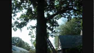 Tree Wound Care - Filling a Cavity.