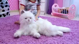 Интерактивная игрушка кошка Лулу FurrealFriends Hasbro