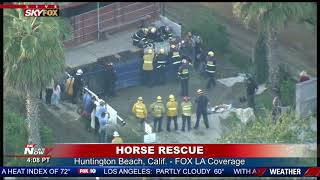 🐎 HORSE RESCUED FROM DUMPSTER: Fire crews hoist animal to safety in Huntington Beach, CA