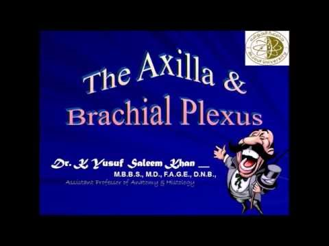 Anatomy Lecture on AXILLA & BRACHIAL PLEXUS .......... by Dr Yusuf