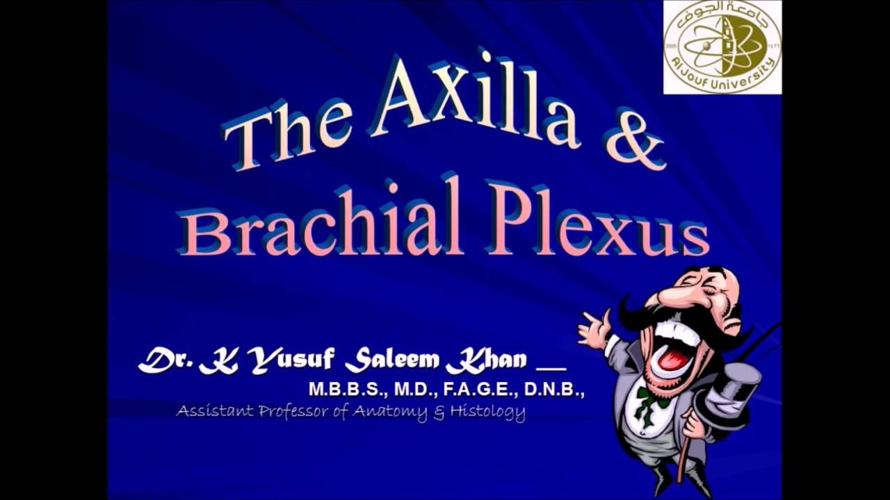 Anatomy Lecture on AXILLA & BRACHIAL PLEXUS .......... by Dr Yusuf ...
