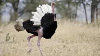 Отряды птиц. Биология 7 класс