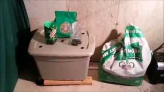 Indoor Worm Bin with Worm Eggs and the Ultimate Fruit Fly Trap