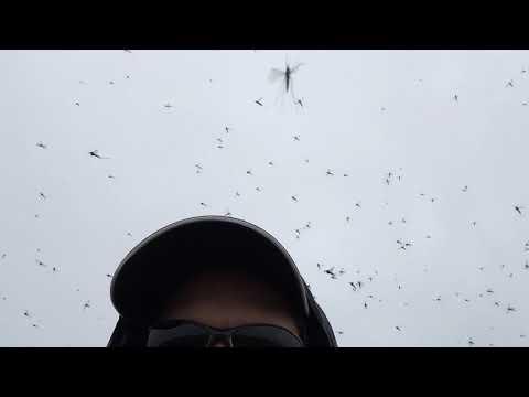 Arctic Ecology Program mosquito
