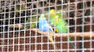 Musikkvideo - Dyrene i Afrika (Follo Folkehøgskole 11/12)