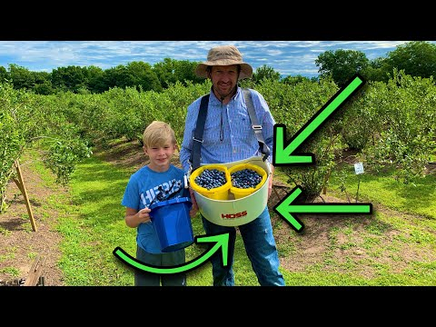 SCARED the Blueberry Field Owner �� | Your Picking How Many!?! |