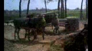 vuclip xxx donkey ke saza