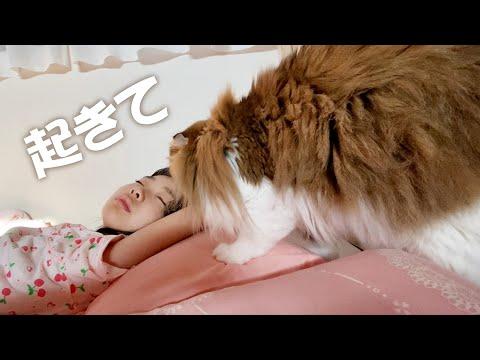 夏休み初日ゆっくり寝るつもりの娘を起こしに来て宿題を見守る猫