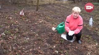 Персональный блог садовода и огородника Светланы Кацаповой 29 выпуск (ранней весной на грядках)