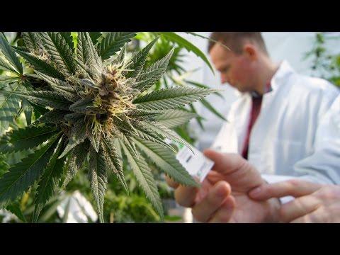 New Medical Science on Marijuana with Thoma Kikis