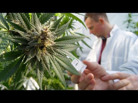 New Medical Science on Marijuana with Thoma Kikis