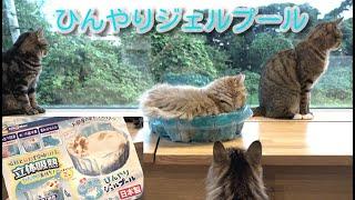 猫用ベッド ひんやりジェルプール