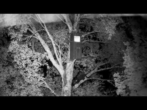 Kellas cat attack on Barn Owl nest box
