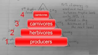 Ecological Pyramids and Trophic Levels