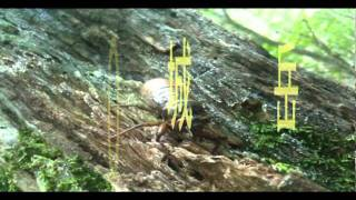 羽化前の動いてる幼虫を見たのは初めてだったのでちょっと感動。 まわり...