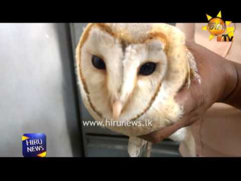 an owl in colombo High Court