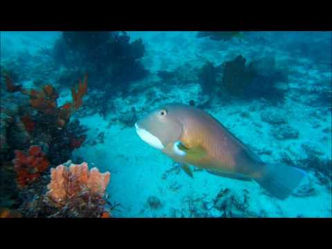 Abrolhos islands anemone lump DIVE 2017 35m full dive