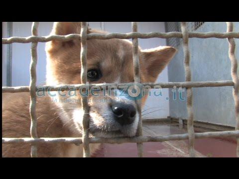 Cuccioli sequestrati, l'Enpa di Vicenza subissata di richieste di adozione