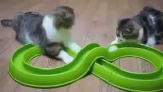 4#Приколы коты кошки ор ржака пушистики киски#4