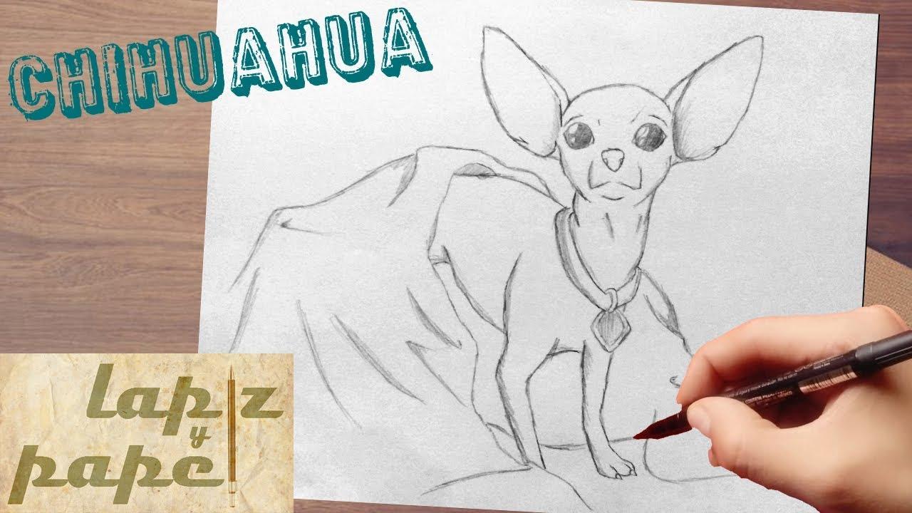 como dibujar un chihuahua / how to draw chihuahua - YouTube