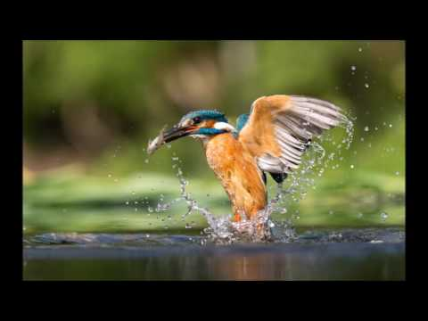 Gary Jones Wildlife Photography 2016 Review