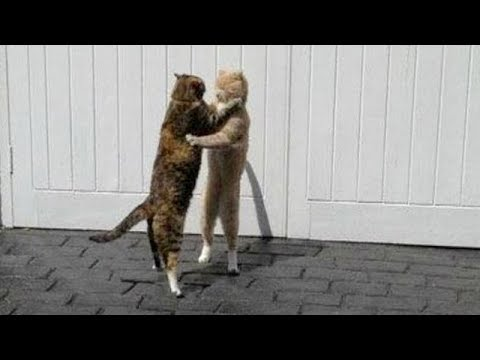 So FUNNY that you will FEEL DIZZY! - Ultra FUNNY ANIMAL VIDEOS compilation