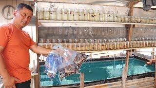 This FISH FARM sells the world&#39s cheapest BETTA FISH