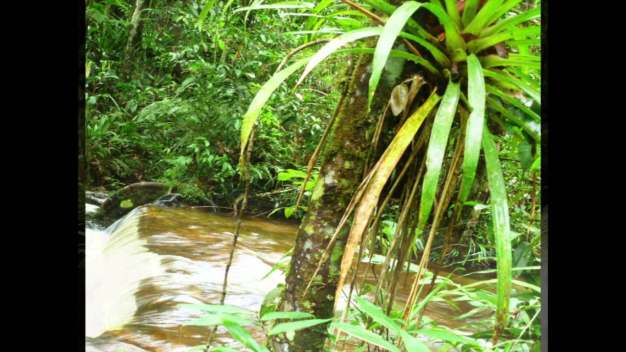 what is happening to the amazon rainforest The amazon rainforest is more than half of the entire world's remaining rainforests the rainforest is home to 10% of the known species in the world that's a lot for one area.
