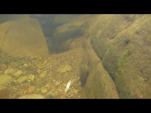 Fishinguide Scotland's Secret Salmon River