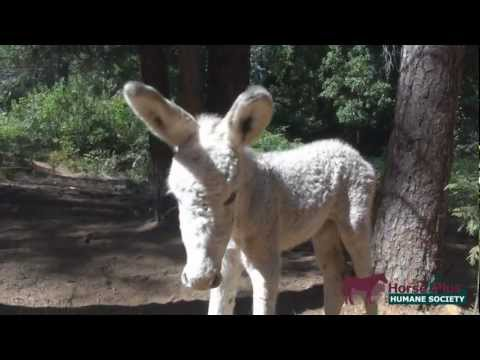 Precious' Baby - Baby Donkey