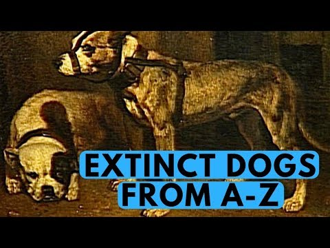 All Extinct Dog Breeds With Pictures (from A to Z)