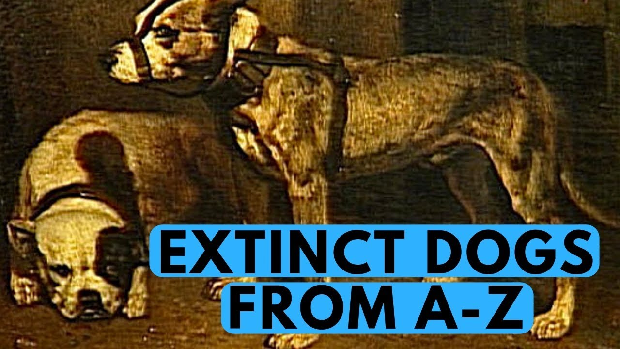 All Extinct Dog Breeds With Pictures From A To Z
