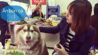 Alas Mật đi ăn sáng với chủ - tranh thủ ngắm gái ::) - Mật Pet Family