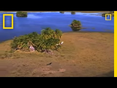 Predators and Prey: Okavango | National Geographic