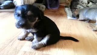 Cute Puppies Doing Funny Things Compilation 2016