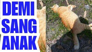 MASYAALLAH: KUCING HADAPI BAH4YA DEMI SELAMATKAN ANAKNYA | Keberanian Induk Hewan Lindungi Anaknya