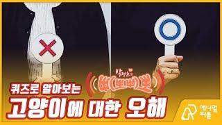 [박정윤의 '멍냥 삐뽀삐뽀' #9] 도전 OX! 고양이에 대한 오해들